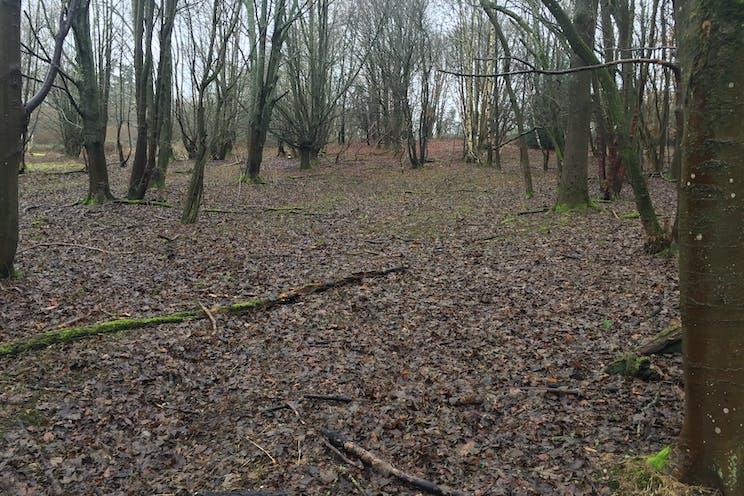 Land South Of Pinchington Lane, Newbury, Newbury, Development / Land For Sale - IMG6895.JPG
