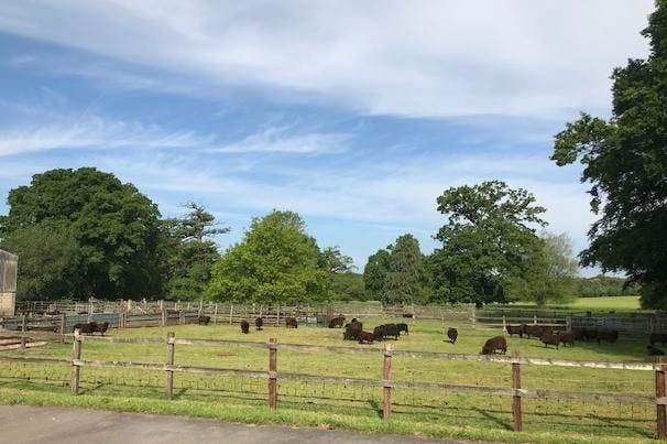 1 Stable Court, Herriard Park, Herriard, Office To Let - Sheep.jpg